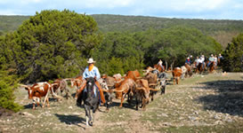Y.O. Ranch near Kerrville