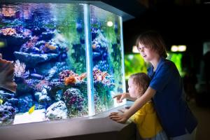 Aquarium near Restaurants in Downtown Dallas